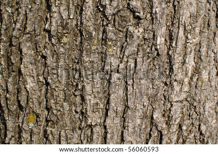 Tree Trunk Brown Background - stock photo