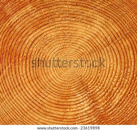 Tree trunk butt-end with multiple rings - stock photo