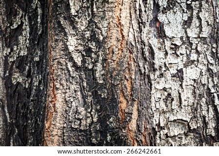tree trunk , close up wood texture , Texture of old tree bark - stock photo