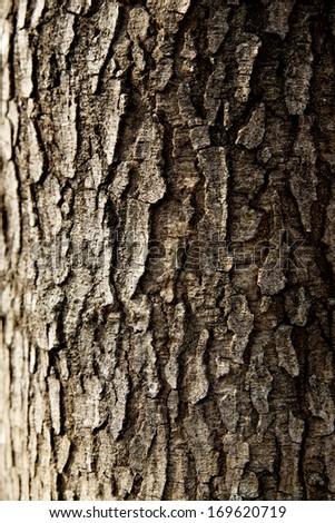 tree trunk closeup background wallpaper - stock photo