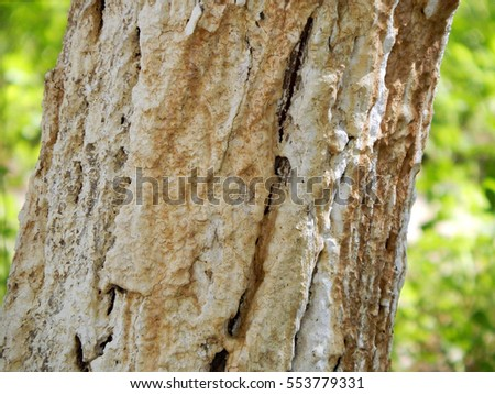 Tree trunk covered with lime.