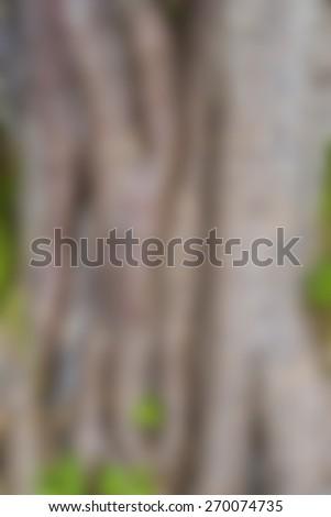 Tree trunk - de-focused / blurred  - stock photo