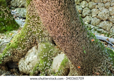 Tree trunk full with Jersey tiger butterflies - stock photo