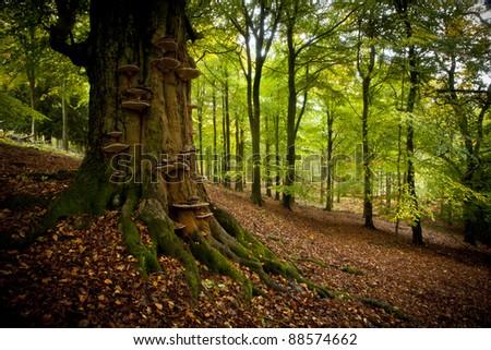 Tree trunk in English wood - stock photo