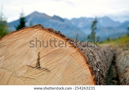 Tree trunk in mountains, a chopped off tree showing annual rings - stock photo