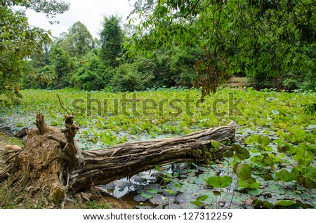Tree trunk in the moat in Banteay Kdei Temple - Angkor, Cambodia