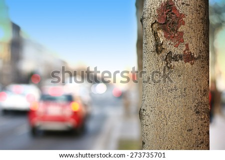 tree trunk isolated from background - stock photo
