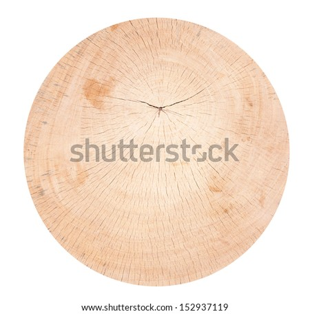 tree trunk , isolated on white background