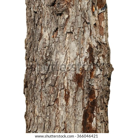 tree trunk isolated on white background, old apple tree - stock photo