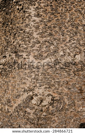 tree trunk texture background - stock photo