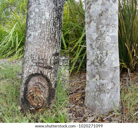 Tree Trunk Textures, Australian native tree bark