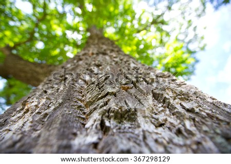 tree trunk view from below - stock photo