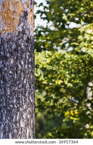 Tree trunk with abstract forest background - stock photo