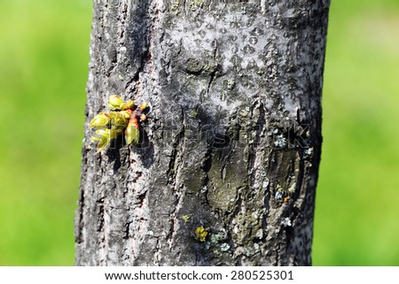 Tree trunk with buds close up