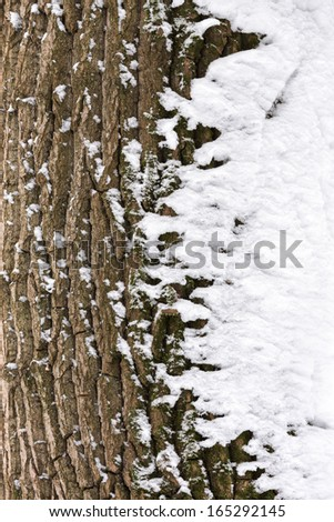 Tree trunk with fluffy snow