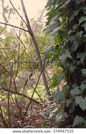 Tree trunk with green ivy and forest plants abstract landscape. - stock photo