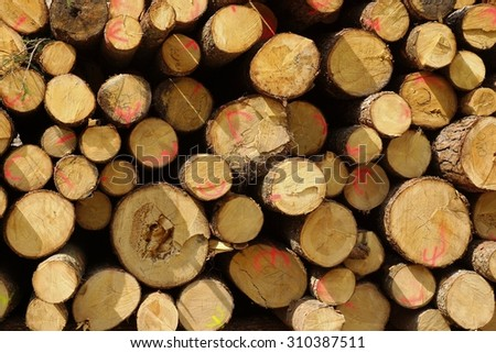 Tree Trunks - stock photo
