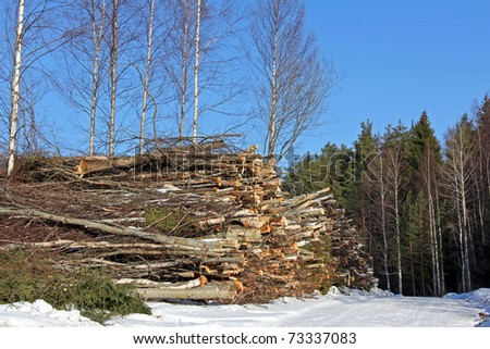 Tree Trunks for Wood Fuel in Forest - stock photo