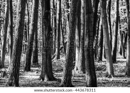 Tree trunks in forrest