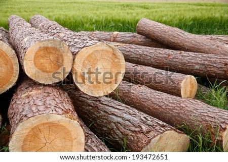 Tree trunks lying in the field - stock photo