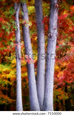 tree trunks with colorful leaves in the background