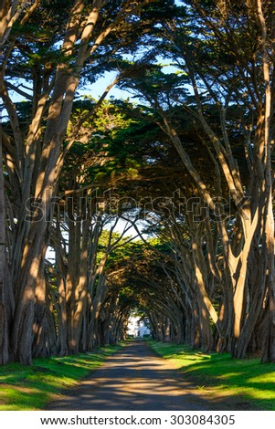 Tree Tunnel, Point Reyes National Seashore - stock photo