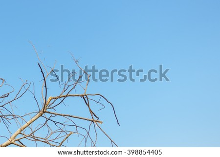 Tree twig with blue sky background:Selective focus:Ideal use for background. - stock photo