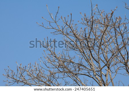 Tree twigs with bare trunks and branches  - stock photo
