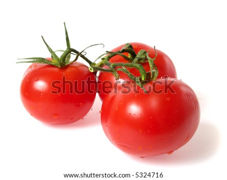 Tree vine tomatoes, fresh with water droplets, isolated on white - stock photo