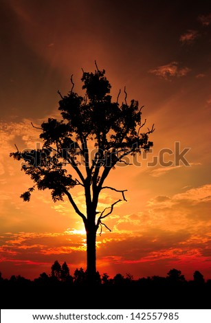 tree when sunset in countryside
