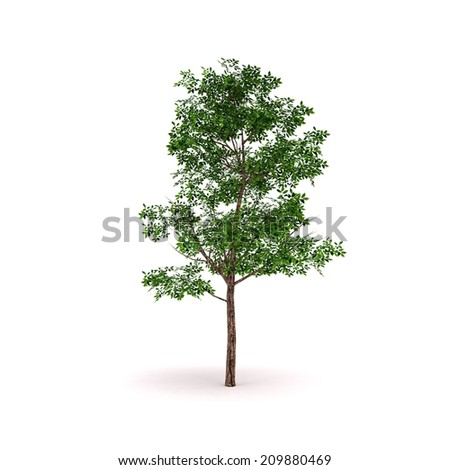 Tree / White isolated tree / Isolated tree background