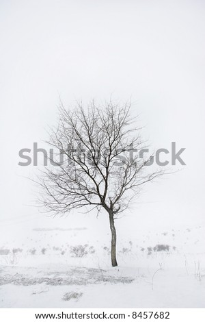 tree; winter; snow; season; black