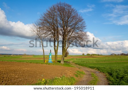 tree with a dirt road