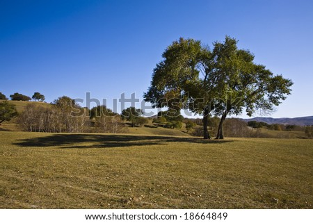 tree with a shadow - stock photo