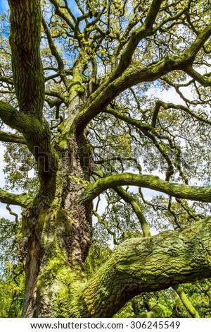 Tree with algae - stock photo