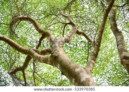 Tree with branches in nature.
