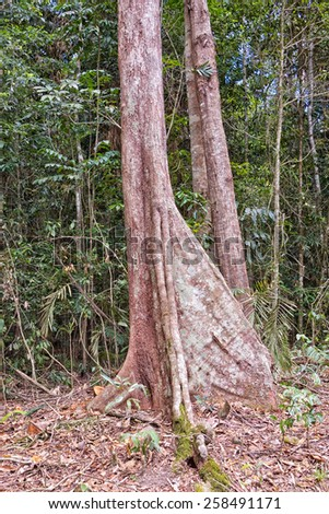 Buttress Rainforest Roots Stock Photos, Royalty-Free Images ...