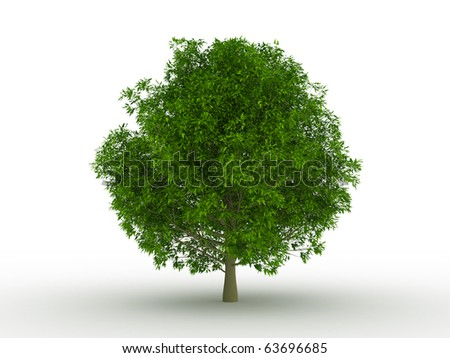 tree with fresh green leafs