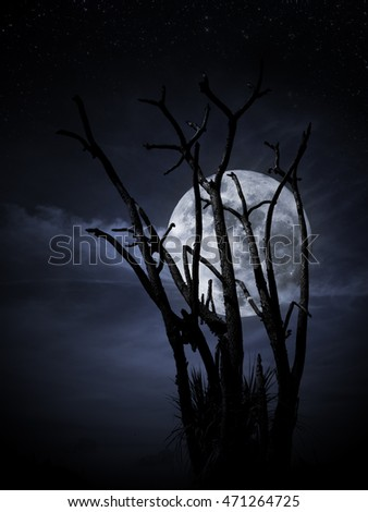 Tree with full moon arising from branches