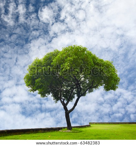 Tree with green leaves on blue cloudy sky background