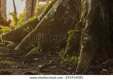 tree with moss on roots in forest. - stock photo