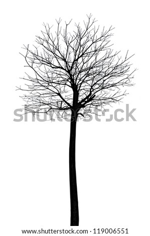 Tree with no leaves - silhouette  - stock photo