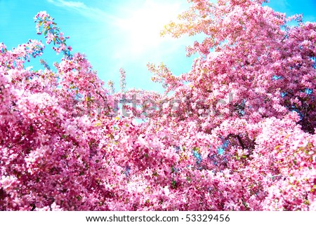 Tree with red flowers and blue sky with sun - stock photo