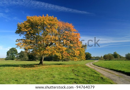 Tree with red leaves - stock photo