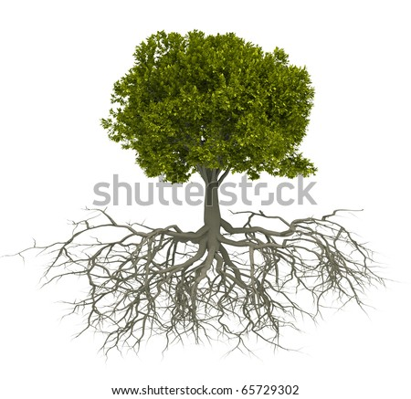 Tree with root isolated over white - this is a 3d render illustration - stock photo