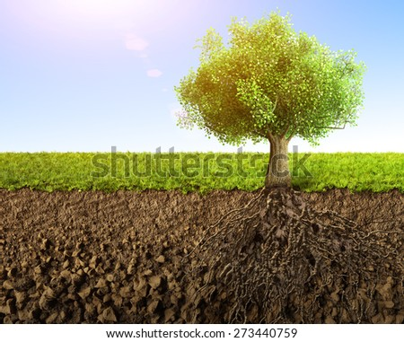 tree with roots  - stock photo