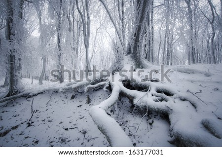 tree with roots covered in snow in foggy forest in winter - stock photo