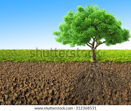 tree with roots 3D rendering  - stock photo