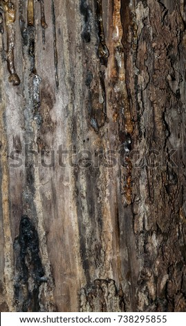 how to stop tree sap from running