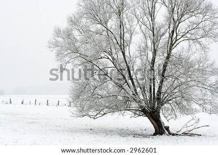 Tree with snow